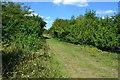 SU2140 : Footpath on former railway trackbed, RSPB Winterbourne Downs by David Martin