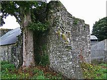 N8056 : Castles of Leinster: Trim, Nangle's Castle, Meath (2) by Garry Dickinson