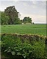 NH8449 : Walled Garden by valenta