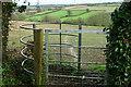 ST7059 : Path, Withyditch by Derek Harper