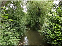 TQ5571 : River Darent viewed from footbridge on Darent Valley Path by Paul Williams
