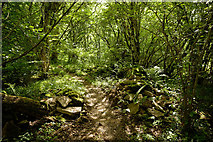 NH5857 : Path through the collapsed wall, Drummondreach Oak Wood by Julian Paren