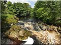 SD8163 : River Ribble upstream of Giggleswick Memorial Footbridge by Stephen Craven