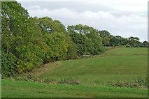 SJ6541 : Cheshire farmland east of Coxbank by Roger  Kidd