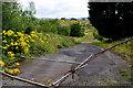 H4373 : Waste ground, Gortmore, Omagh by Kenneth  Allen