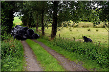 H4277 : Overgrown lane, Tattraconnaghty by Kenneth  Allen