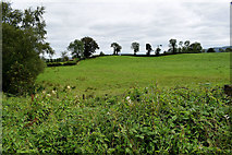 H4277 : Mountjoy Forest West Division Townland by Kenneth  Allen