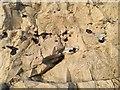 TV4898 : Flints in the chalk, Splash Point, Seaford by Robin Stott