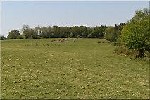 TQ5935 : High Weald Landscape Trail by N Chadwick