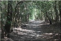 TQ5936 : TWCW, Chase Wood by N Chadwick