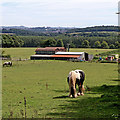 SO8585 : Grazing by Greensforge Lane near Stourton, Staffordshire by Roger  Kidd
