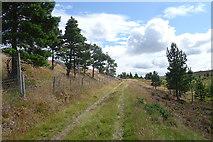 NJ0847 : Towards Loch Dallas by Anne Burgess