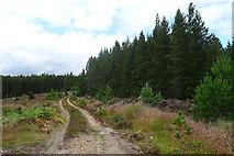 NJ0947 : Track to Grassy Loch and Fir Loch by Anne Burgess