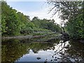NH5229 : River Coiltie - Urquhart Bay Woods by valenta