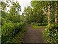 NH5129 : Urquhart Bay Woods by valenta