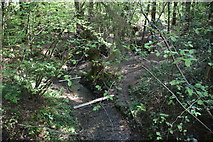 TQ5936 : Stream in Chase Wood by N Chadwick