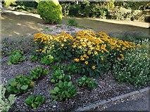 TQ2588 : Flower bed in Northway Gardens, Hampstead Garden Suburb by David Howard