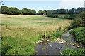 SU2290 : River Cole at Highworth Road by Des Blenkinsopp