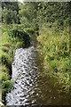 TQ5567 : River Darent by N Chadwick