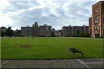 SE6250 : Derwent College and Heslington Hall by DS Pugh