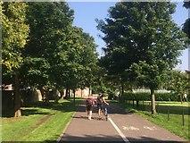 NT2572 : North Meadow Walk by Richard Webb