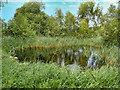 SD4213 : Small Pool near the Janet Kear Hide, Martin Mere Wetlands Centre by David Dixon