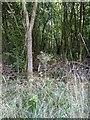 TF0820 : Marsh Willowherb by Bob Harvey