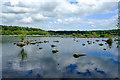 SJ5471 : Blakemere Moss, Delamere Forest by Jeff Buck