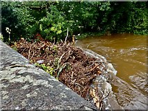 J3731 : Tree debris in the Shimna trapped against the New Bridge during Storm Francis by Eric Jones