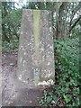 SP9801 : Triangulation Pillar by Cowcroft Wood by David Hillas