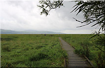 NX4355 : Boardwalk to the Martyr's Stake, Wigtown by Billy McCrorie