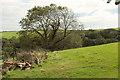 SX7953 : Grass field near Newhouse by Derek Harper