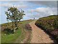 ST1438 : Path on the Quantock Hills, near Crowcombe by Malc McDonald
