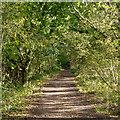 TQ5796 : Hullett's Lane, Bentley near Brentwood by Roger Jones