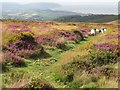 ST1240 : Colour on the Quantock Hills near Bicknoller by Malc McDonald