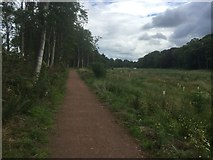 NT5682 : New path, Balgone by Richard Webb