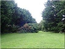 J3731 : Fallen tree in Islands Park by Eric Jones