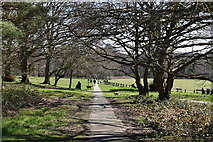 TQ5739 : Footpath, Tunbridge Wells Common by N Chadwick