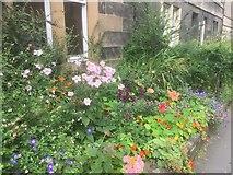 NT2572 : Garden, Livingstone Place by Richard Webb