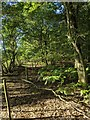 TF0821 : The edge of Bourne Wood by Bob Harvey