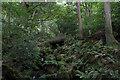 SE0947 : Wooden Bridge in Heber's Ghyll Wood by Chris Heaton