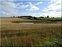 SE1986 : Pond near Rookwith  by JThomas