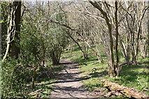 TQ5538 : Footpath, Ramslye Wood by N Chadwick