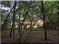 TF0820 : Bring gold unto the woodland's face by Bob Harvey