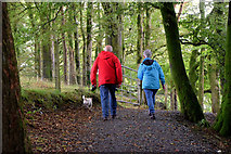 H5776 : Dog walkers, Loughmacrory by Kenneth  Allen
