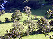 SN7079 : Meadow beside Afon Rheidol by John Lucas
