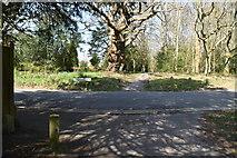 TQ5738 : Path crosses Hungershall Park by N Chadwick