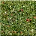 SK6756 : Meadow flowers, Edingley by Alan Murray-Rust