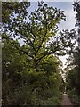TF0820 : Oblique lighting by Bob Harvey