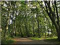 SE2432 : Former carriage drive in Farnley Hall Park by Stephen Craven